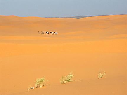 Une caravane dans le désert
