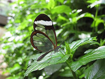 Papillon du Jardin Botanique