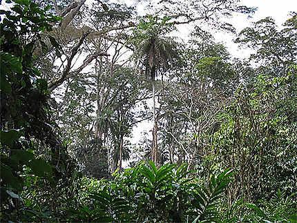 Forêt à Macenta