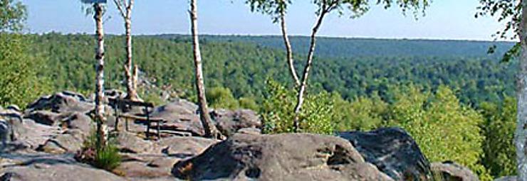 Forêt de Fontainebleau, sur les traces des peintres
