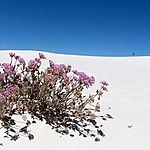 Vie à White Sands National Monument