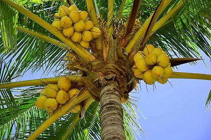 À l'ombre d'un cocotier, Varadero, Cuba