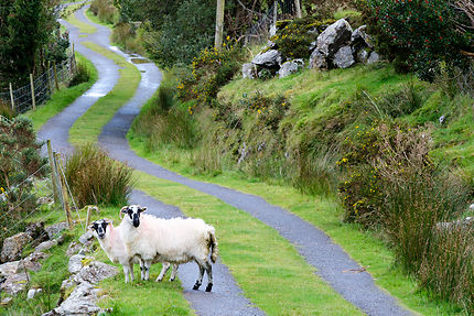 Irlande the kerry way