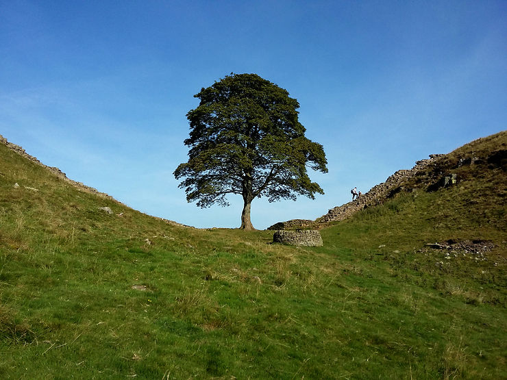 The Lonesome Tree, Lake District, Angleterre
