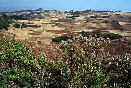 La campagne ethiopienne