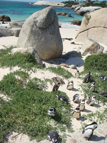 Manchots sur la plage