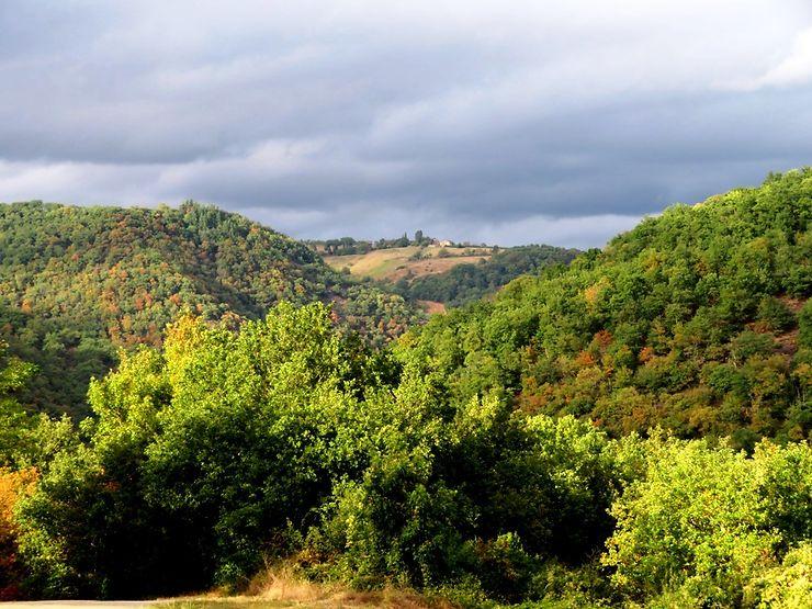 Balade en forêt dans la région d'Albi