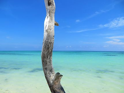 L'île aux bois flottés