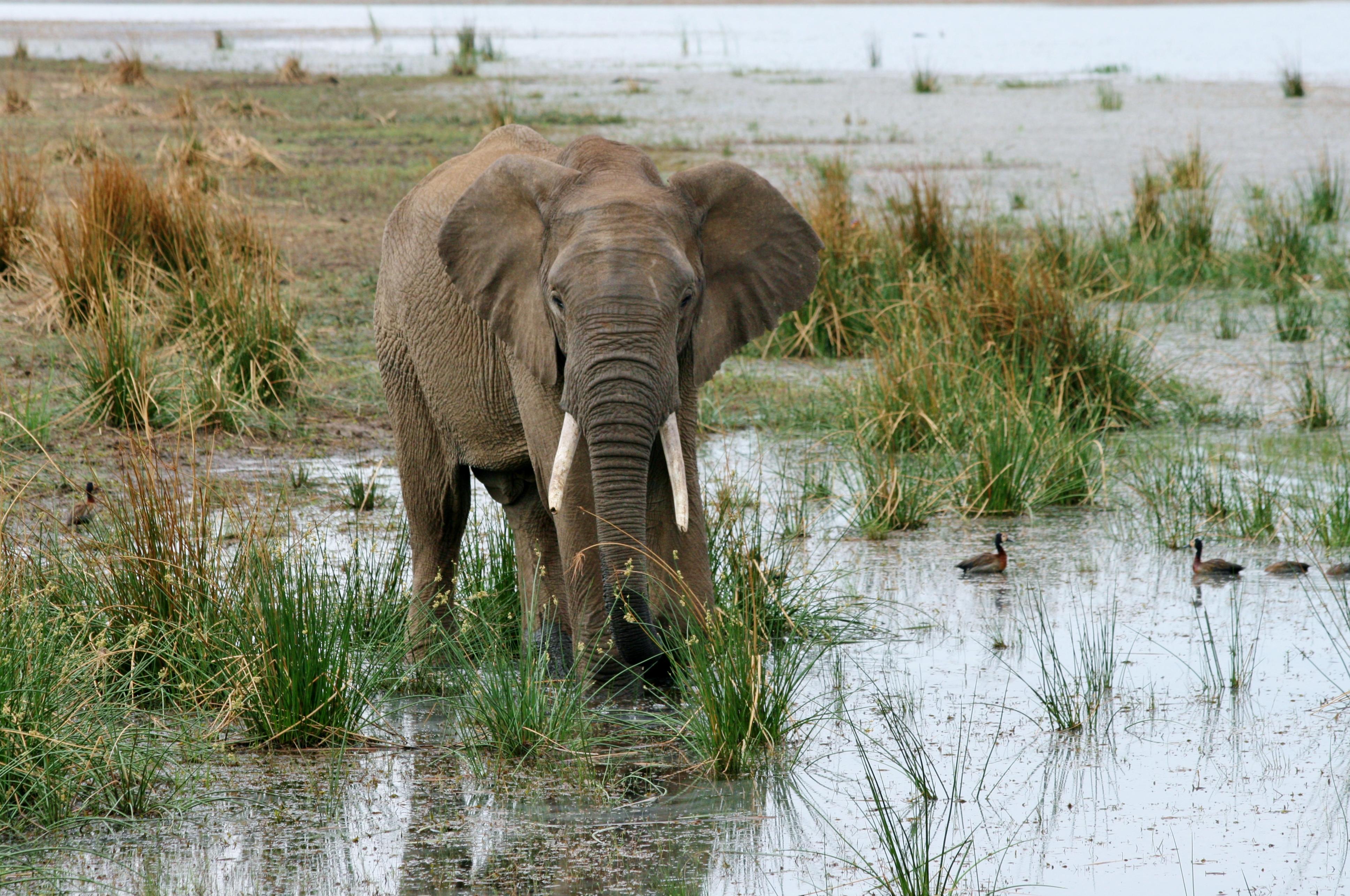 Pilanesberg National Park - Afrique du Sud