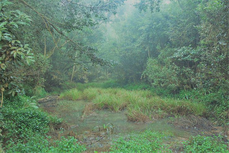 Réserve spéciale d'Analamazoatra : au royaume de l'indri indri