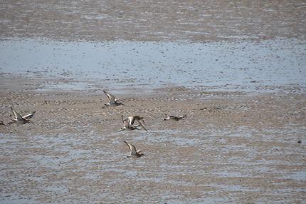 Oiseaux à marée basse
