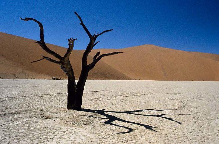 Acacia à Dead Vlei, Namibie