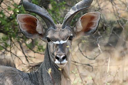 Portrait au Pilanesberg National Park