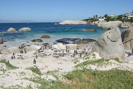 Rencontre avec les pingouins d'Afrique du Sud