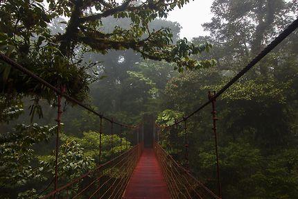 Pont au milieu de la forêt