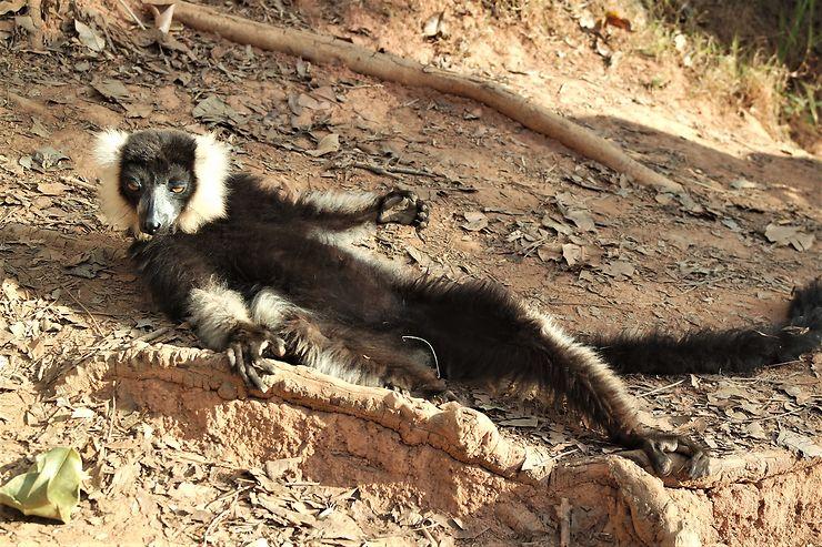Madagascar : deux réserves près d'Antananarivo