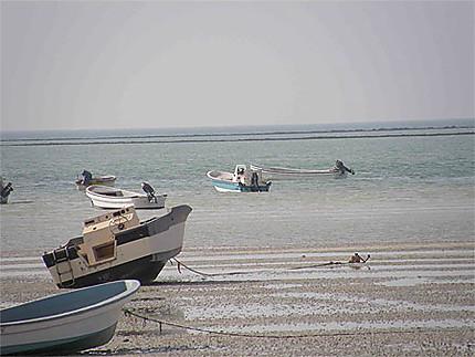 Barque à Al Khuway