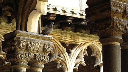 Augustins Pigeons