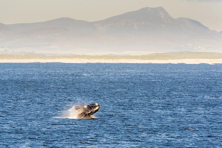 Whale Festival (Festival de la baleine) à Hermanus