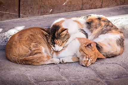 Deux chats dorment en tendresse