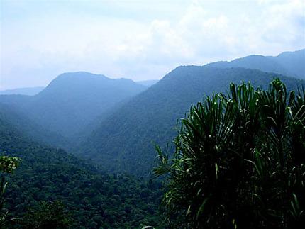 Parc National Braullio Carillo