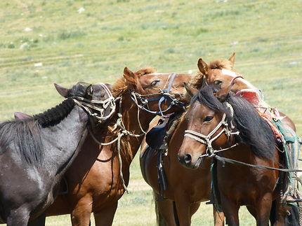 4 chevaux