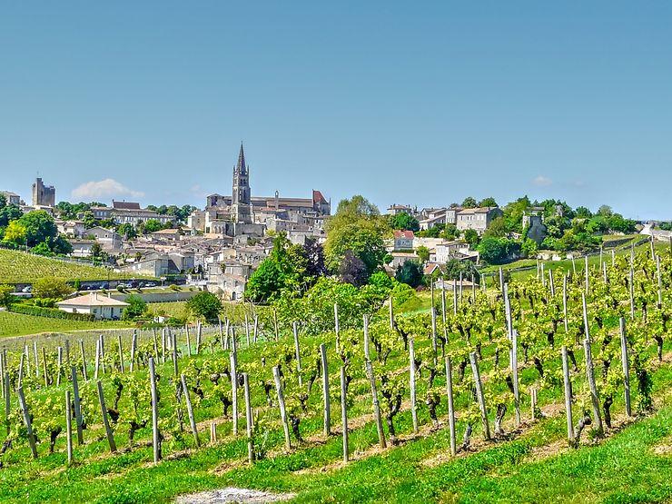 Vignes à Saint-Émilion, Gironde