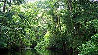 Tortuguero, l'Amazonie du Costa Rica