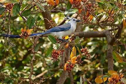 Les oiseaux d'Ometepe