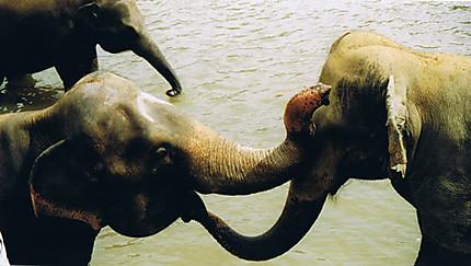 Baiser d'éléphant