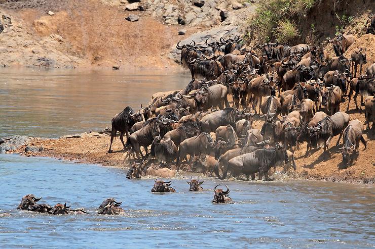 La réserve du Masai Mara : l'apothéose du safari