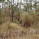 Végétation du Lakefield national park
