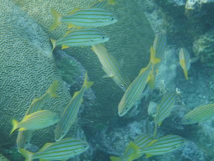 Plongée à Roatan