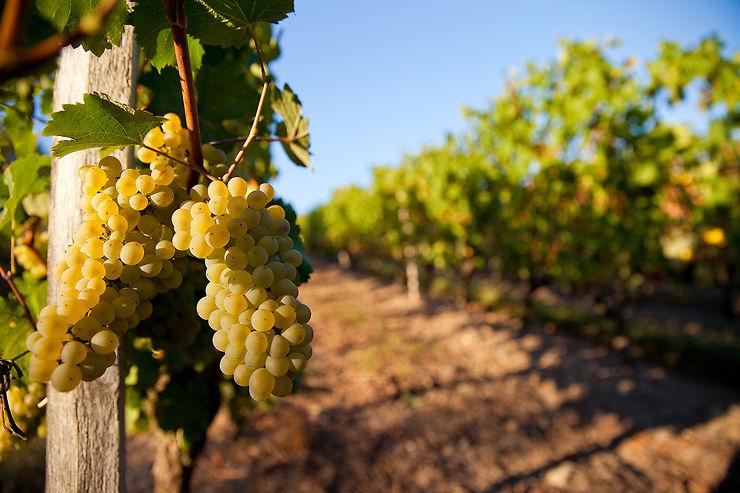 Un secret viticole bien gardé ?
