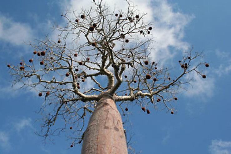 Sud de Madagascar : un Vazaha chez les Vezos
