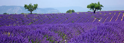 En Provence, sur les routes de la lavande
