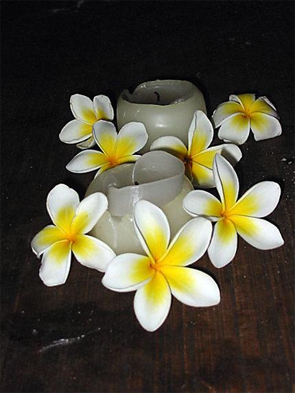 fleur de Tiaré : Fleurs : Île des Pins : Nouvelle ...
