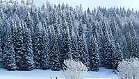 Le Jura franco-suisse, en toute saison