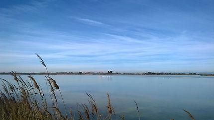 Le calme des étangs lieux de rencontre des oiseaux
