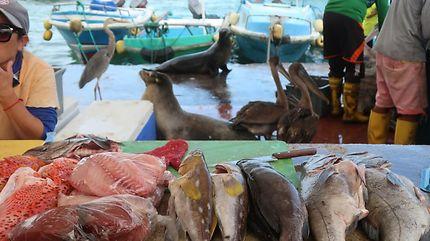 Marché aux poissons de Puerto Ayora