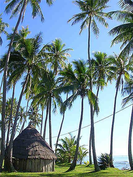 Camping sous les cocotiers