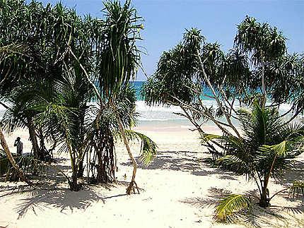 Plage de koggala beach