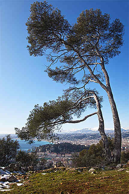 Le Mont Boron à Nice