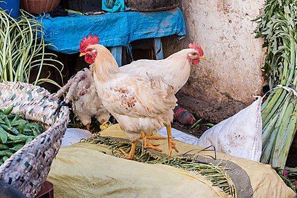 Deux poules flânant autour des légumes