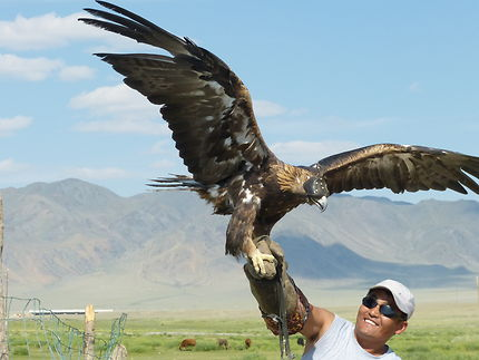 En attendant l'ouverture de la chasse à l'aigle
