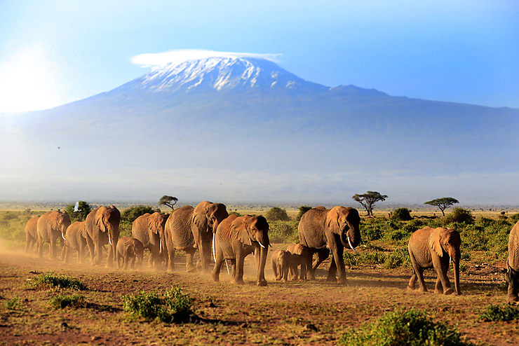 Kenya et Tanzanie : Noël avec les animaux