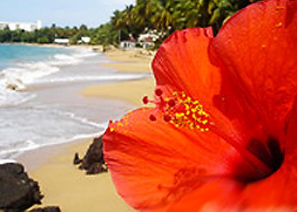Flower in the beach