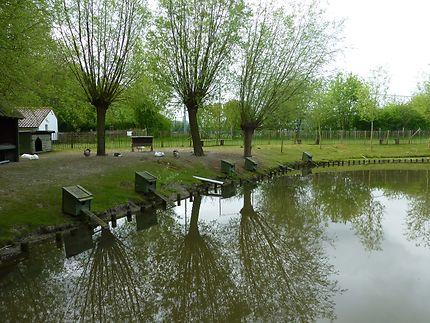 La ferme pédagogique de Lenspolder, en Belgique