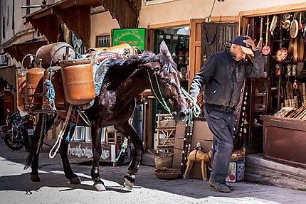 Le cheval, fournisseur de gaz