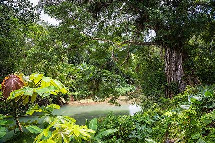 Great River à Montego Bay, Jamaïque